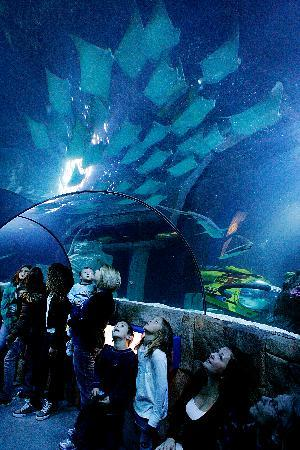 Sea Life Aquarium Carlsbad All You Need To Know Before