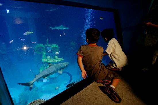 sea aquarium carlsbad 2017 ce qu il faut savoir pour votre visite tripadvisor