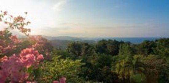 هوتل موكينج بيرد هيل: The view from Mocking Bird Hill