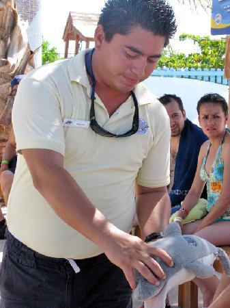 Isla Mujeres, Mexico: Our expert staff teach Dolphin 101 in orientation