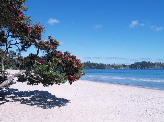 Isla Waiheke, Nueva Zelanda: Onetangi Beach - Waiheke Island