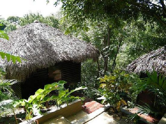 Buena Vista Surf Club : One of the treehouses