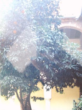 Cordoba, Spain: oranger