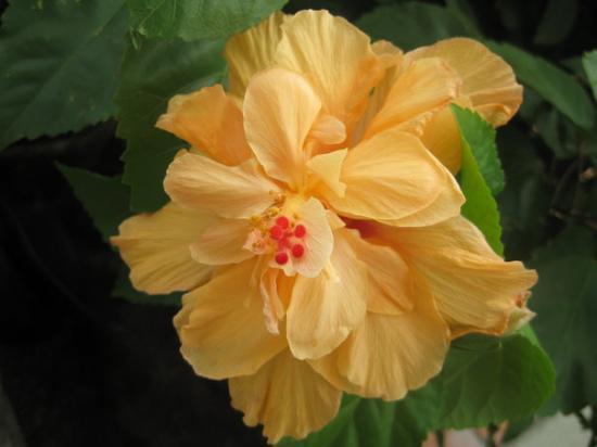 Armenia, Colombia: Flores en La Recuca