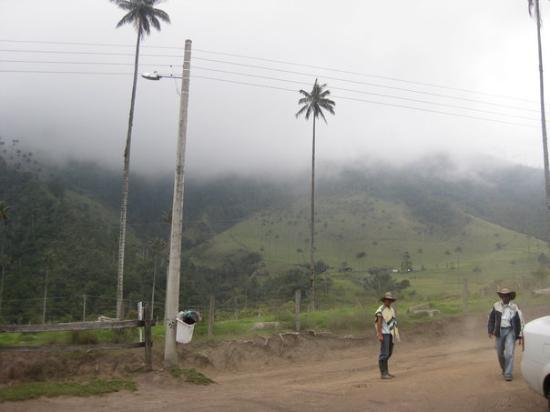 Armenia, Kolumbia: El valle del Cocora