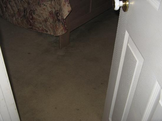 The Kinder Inn : stained carpet in guest room
