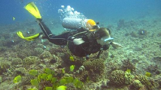 Oahu Diving: exploring the reef