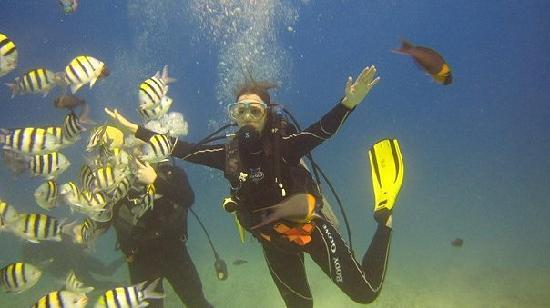 Oahu Diving: dancing with and feeding the fish