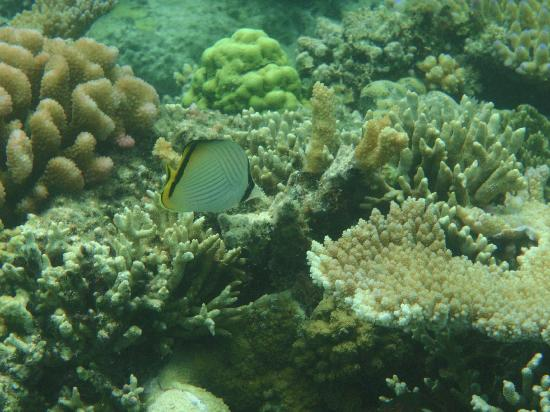 Paradise Cove Resort: View underwater