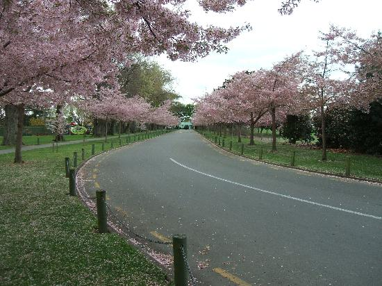 Palmerston North, New Zealand: Close to the lovely Esplanade Gardens