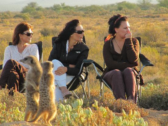 De Zeekoe Guest Farm: Meerkat Tours