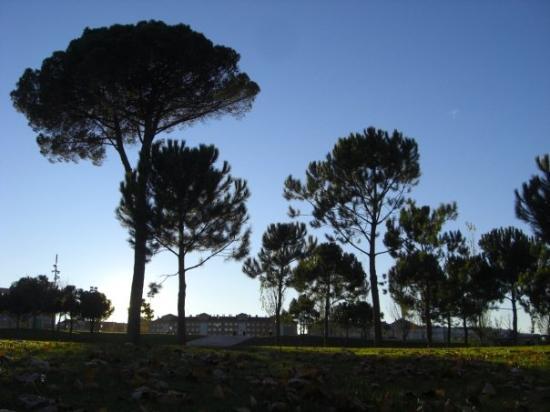 Bilde fra Logroño