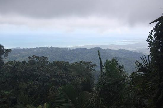 View from El Yunque National Forest