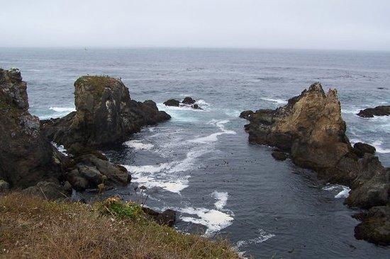 bodega head bodega bay 2019 all you need to know before you go rh tripadvisor com things to do in bodega bay in january things to do in bodega bay july 2 2018