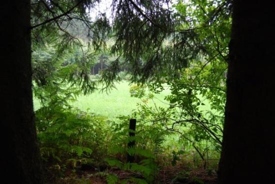 Bastogne, Belgique : view of German line through trees