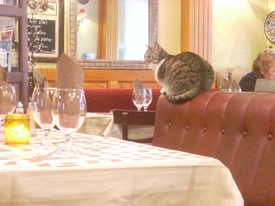 L' Auberge St-Severin: The cat.