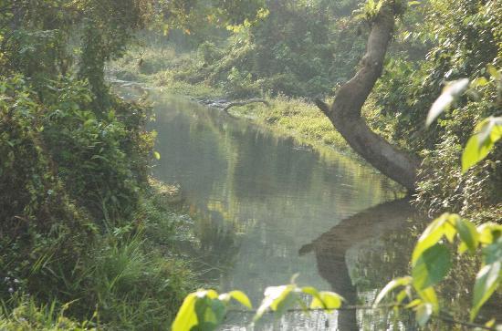 Jalpaiguri, India: Nature at its finest