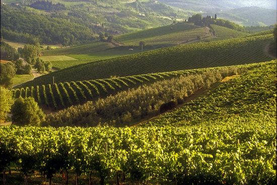Radda in Chianti, Włochy: Castello d'Albola