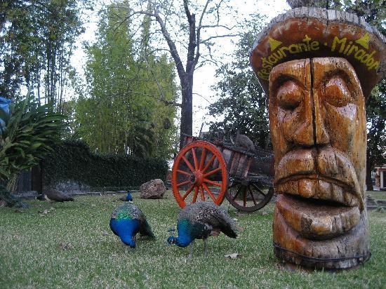 Santiago, Μεξικό: Peacocks