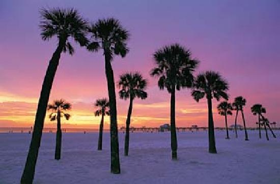 Royal North Beach: Clearwater Beach