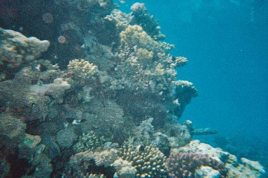 Coral Sea Waterworld Resort: Snorkling