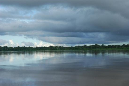 Iquitos, Peru: Unbroken green of riverbank, Rio Amazonas