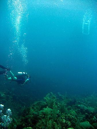 Seagrape Plantation Diveshop: Diver