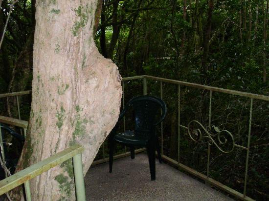 Hidden Canopy Treehouses Boutique Hotel: little balcony...watch you don't knock yourself out with the tree