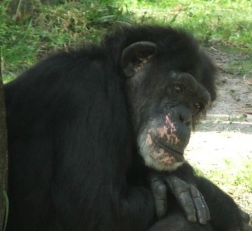 Bilde fra Tampa's Lowry Park Zoo