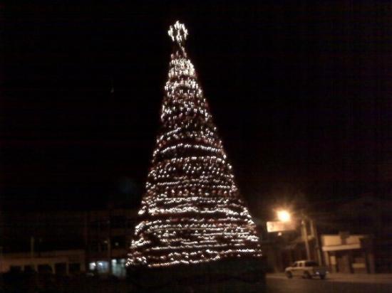 Siguatepeque, ฮอนดูรัส: Siguatepque Tree Display
