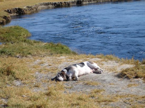 Bishop, CA: My baby taking a naps Lower Owens