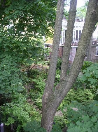 Providence, RI, United States..trees on a hillside near Brown U.