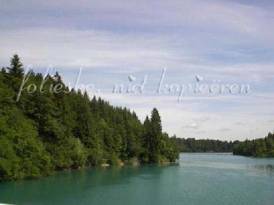 Forggensee: a bayou