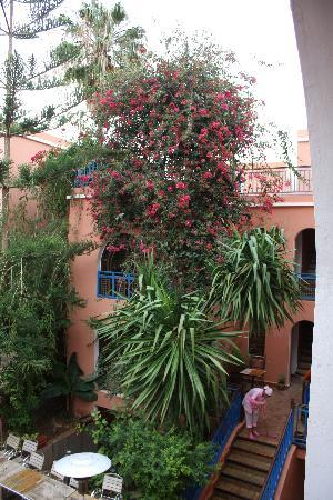 Tamraght, Maroko: Beautiful bush in the courtyard