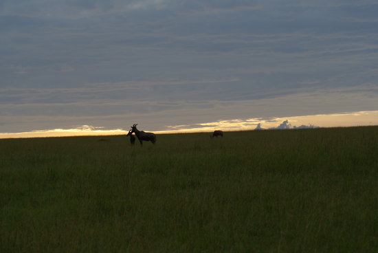 Great Plains Conservation Mara Plains Camp : Sun rise