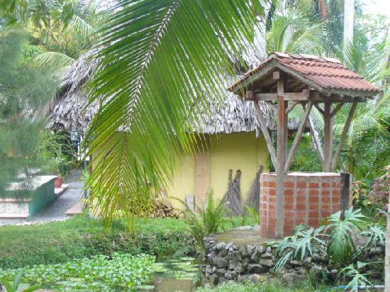 Dos Arboles: view of the hotel garden