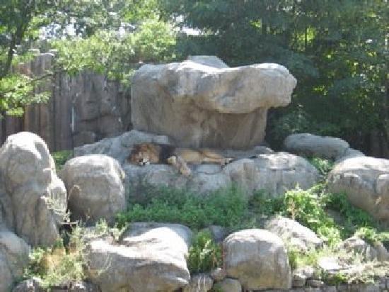 Franklin Park Zoo : lion den