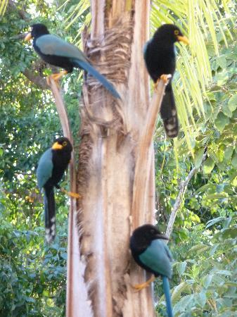 Sandos Playacar Beach Resort: Birds at Hotel
