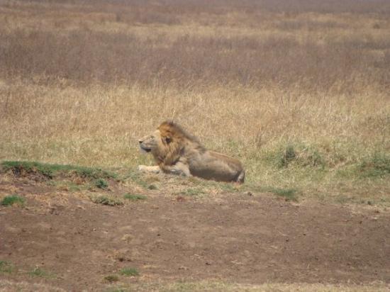 Arusha, Tanzania: oooops...my singing woke him up!
