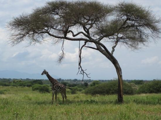 Bilde fra Arusha
