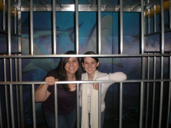 Science Museum of Virginia: Me and maggie going cage diving with sharks lol