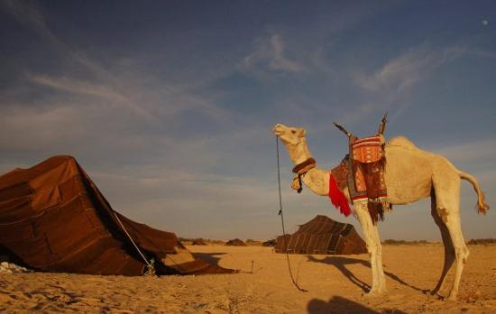 Festival International du Sahara (Douz)