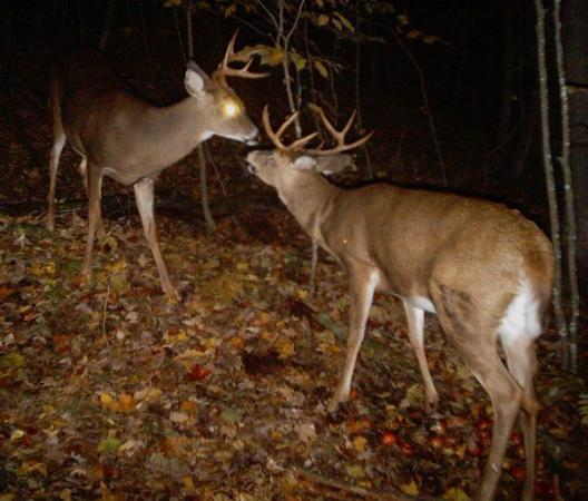 Aitkin, MN: Two eight pointers face off