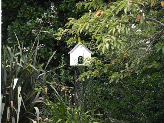 Timandra Motel: Bird House