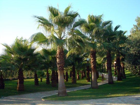Miramare Queen Hotel: grounds