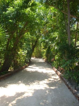Bilde fra San Pedro