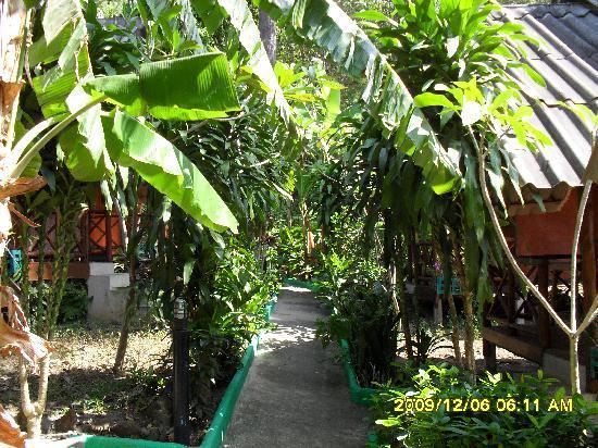 The Grand Tree Resort: saigars