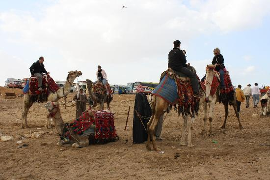 Pyramidene i Giza: Camel Ride