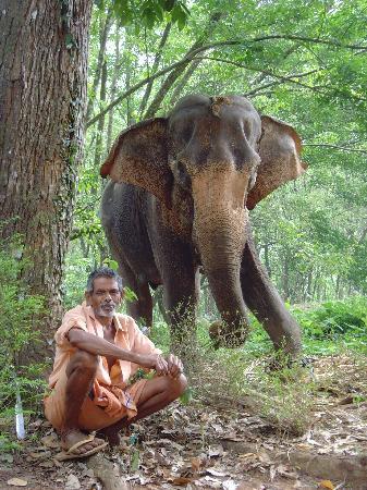 Malabar House : Serenity, une balade en éléphant avec son maître