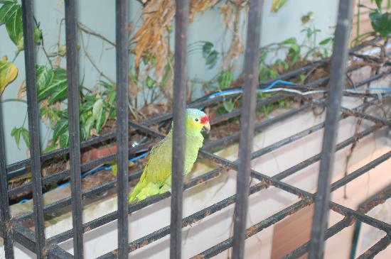 Hacienda Tamarindo: Luisita, the resident parrot.